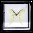 Vintage vlinderlijst No. 97
