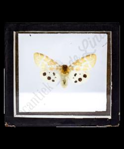 Vlinderlijst No. 98