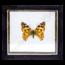 Vlinderlijst No. 84