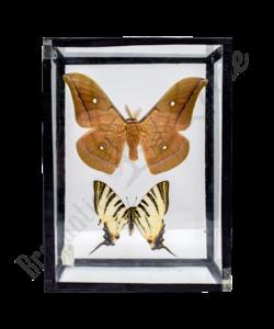 Vintage vlinderlijst No. 82