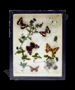 Vintage vlinderlijst No. 89