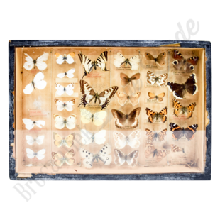 Vintage vlinderlijst No. 109
