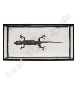 Opgezette Gecko - Tokeh