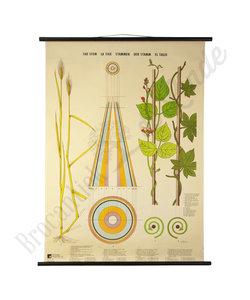 Botanische schoolplaat 'Planten groei'
