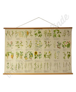 Botanische schoolplaat - Landbouwgewasssen