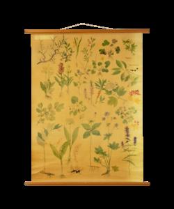 Botanische schoolplaat - Bloemen