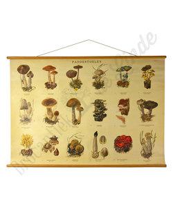 Botanische schoolplaat - Paddestoelen