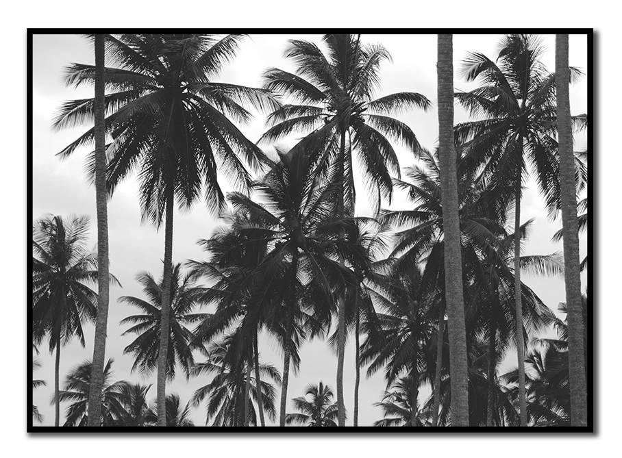 livstil LA Palms 10
