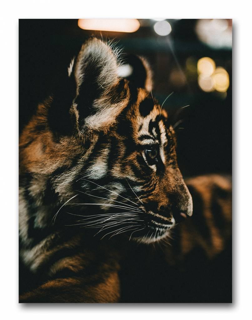 livstil Baby Tiger