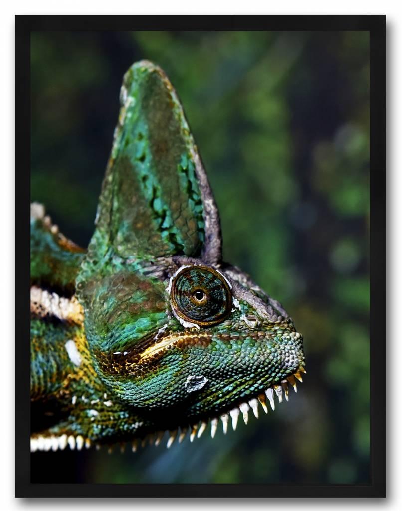 livstil Chameleon