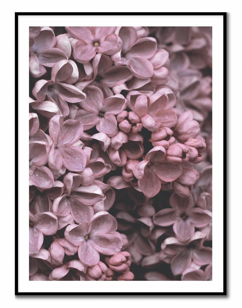 livstil Lilac