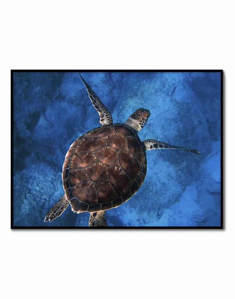 livstil Blue Turtle