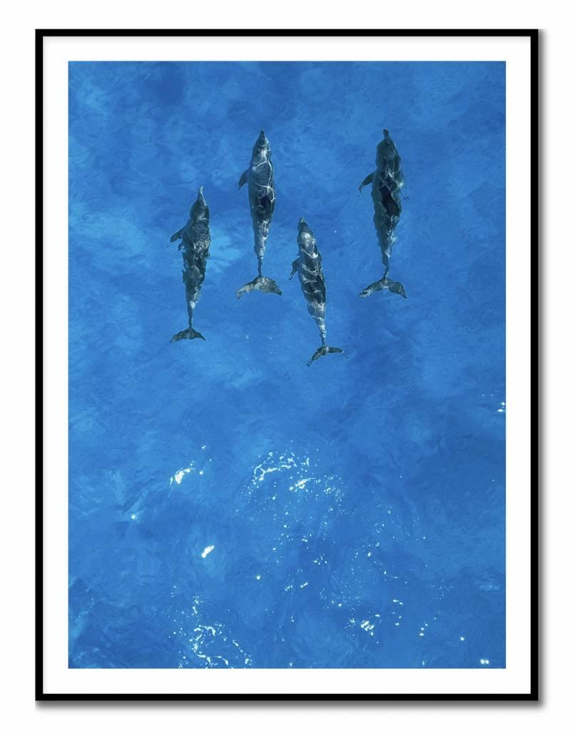 livstil Blue Dolphins