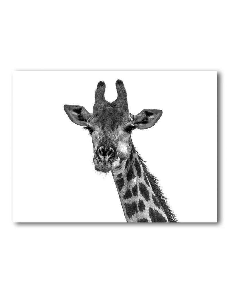 livstil Giraffe