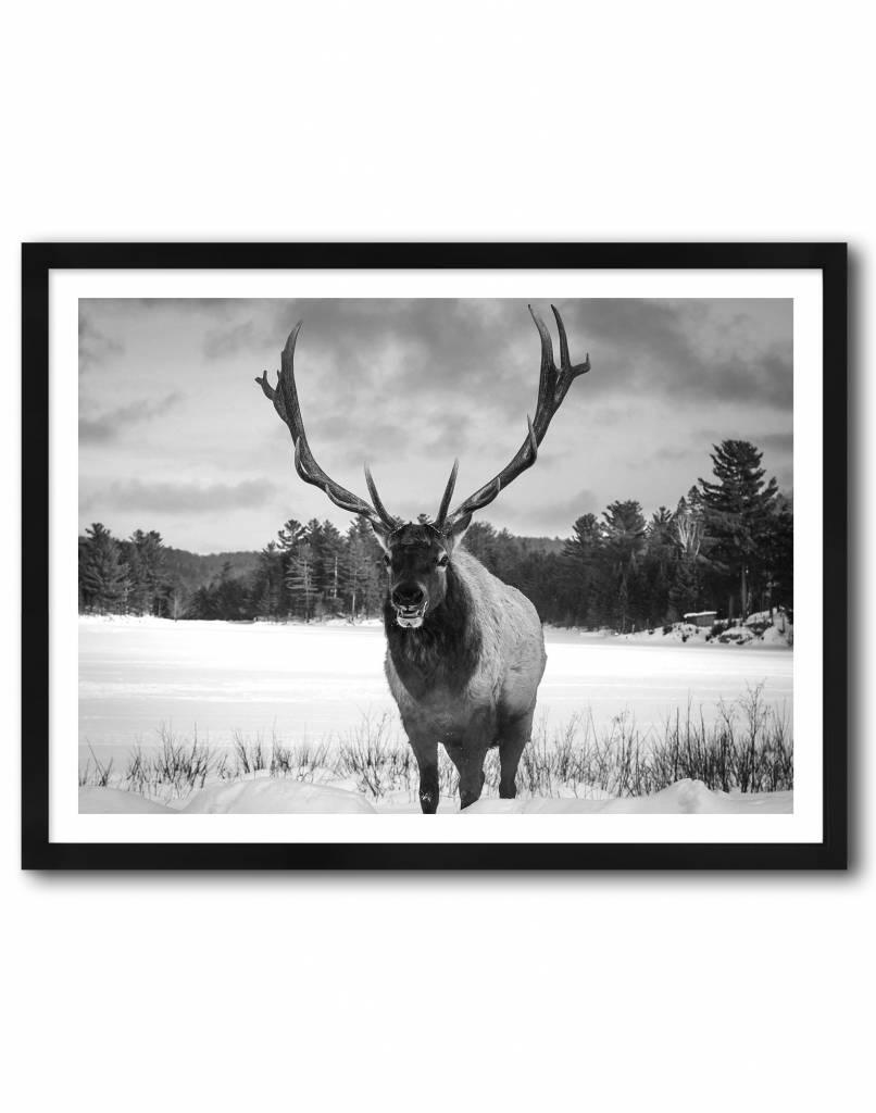 livstil Deer