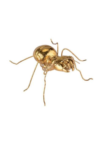 GIFT Company Insekt Ameise
