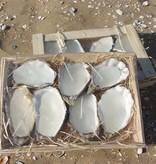 Puur Basic Home selection Orgineel cadeau deze mooie oester / oyster kaarsen - 5-7 stuks  in kistje