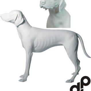 Duitse korthaar wit met skulpturen ogen
