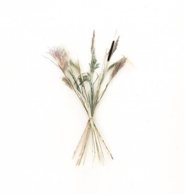 Dried Mix of Grasses