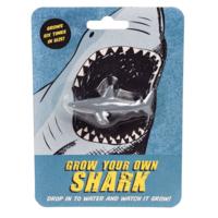 Rex London Grow your own Shark