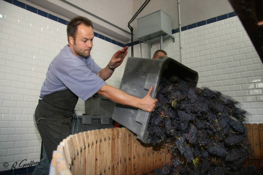 main right banner Dercor wijnen