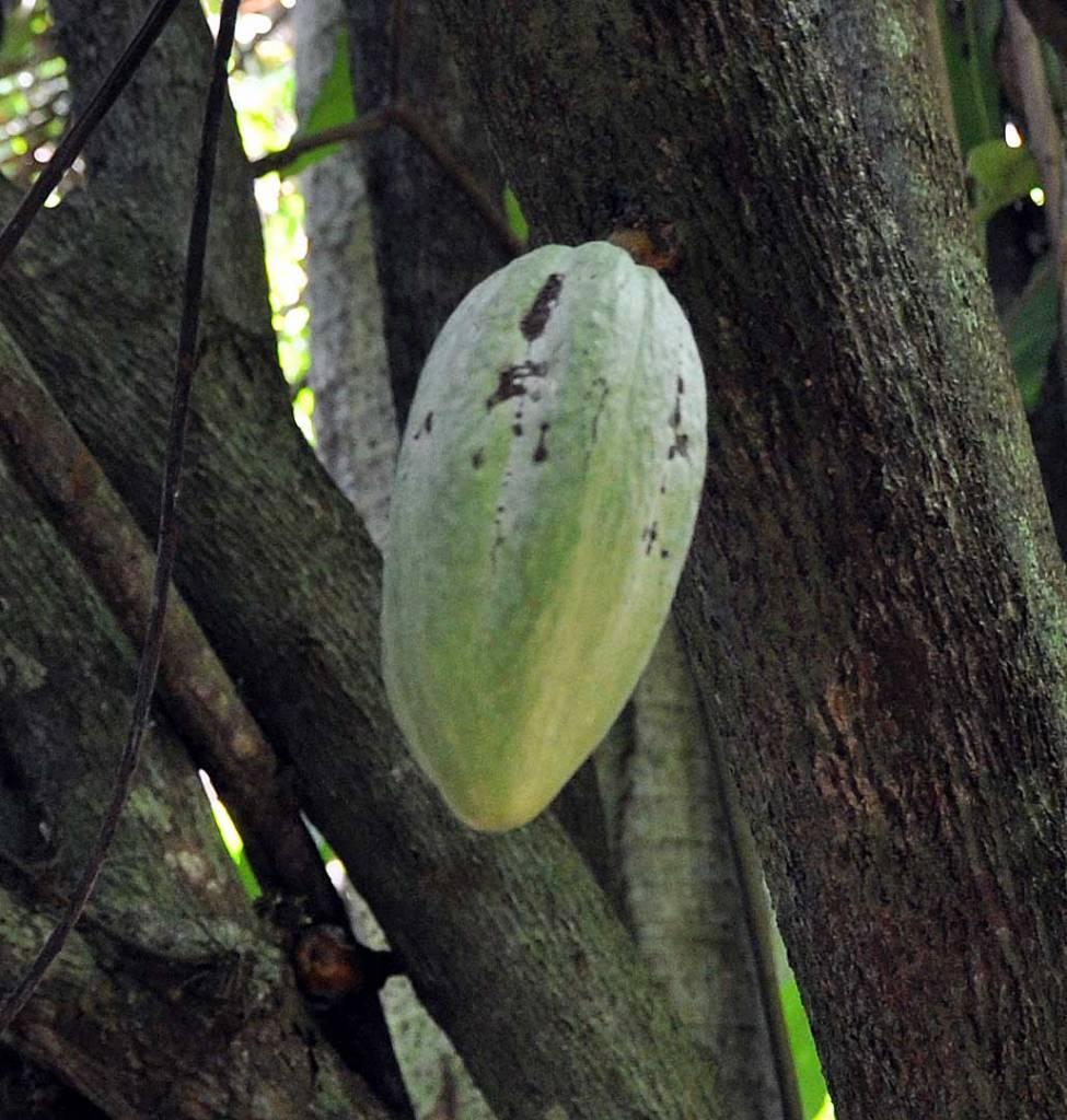 Organic Maca & Cacao Pulver, 100 g