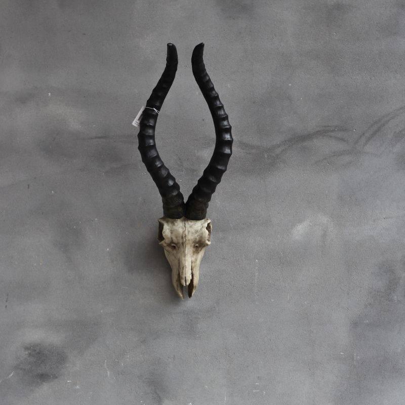 skull schaap