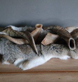 Ramshoorn 30cm