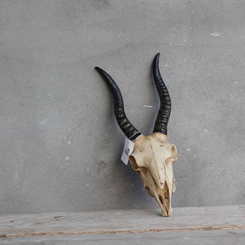 Antilope kopje