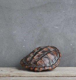 Schildpadden schild