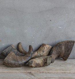 Buffalo hoorn 15/20cm