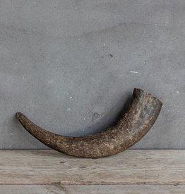 Buffalo hoorn 30/40cm