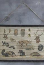 Fotokaart wilde dieren