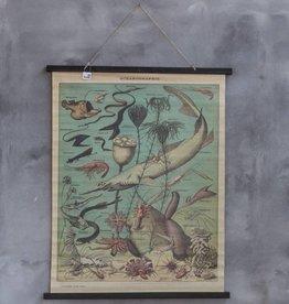 Fotokaart vissen