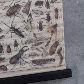 Schoolkaart insekten