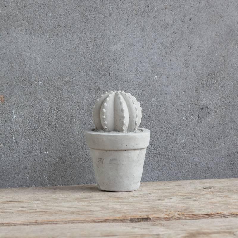 Cactus beton bol klein