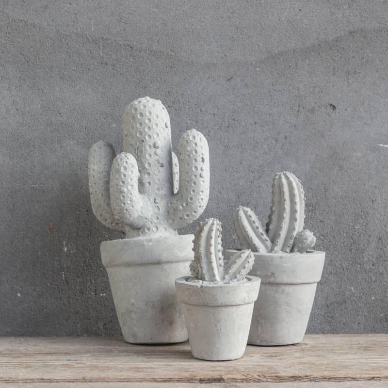 Cactus beton klein