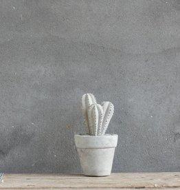 Cactus beton groot