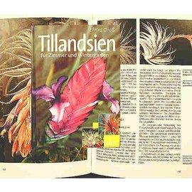 Tillandsien für Zimmer und Wintergarten Elvira Gross