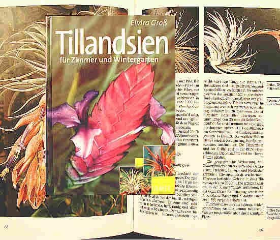 Tillandsien für Zimmer und Wintergarten Elvira Gross Uhlig Kakteen more than 5,000 different