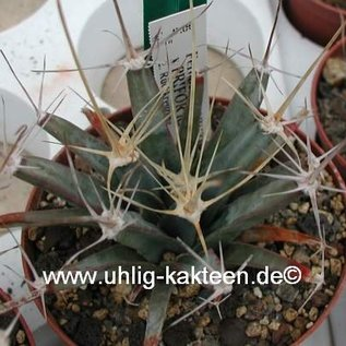 Ferobergia PRIFOR / PRI x PRIFOR R2