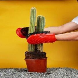 Cacti gloves