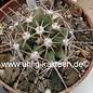 Ferobergia PRIFOR / FOR x PRIFOR / FOR R3