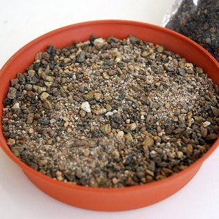 Lithops substrate