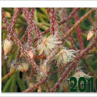 KuaS Kalender 2010 anstatt 7,50 nur noch