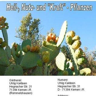 Sukkulente Heil-, Nutz- und Kraftpflanzen