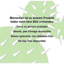Gastrolea Gasteria glomerata x Aloe buhrii