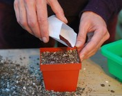 Paquetes de iniciación semillas