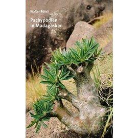 Pachypodium à Madagascar Walter Röösli