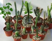 Paquets d'entrées  succulentes